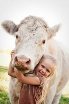 Release Your Cows » No Clinging, No Expectation, and No Desire